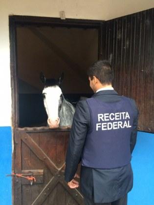 Receita Federal deflagra operação Sangue Impuro para combater fraudes na importação de cavalos