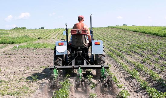 TRF4 determina aposentadoria de agricultor que teve câncer de pele e precisa evitar o sol