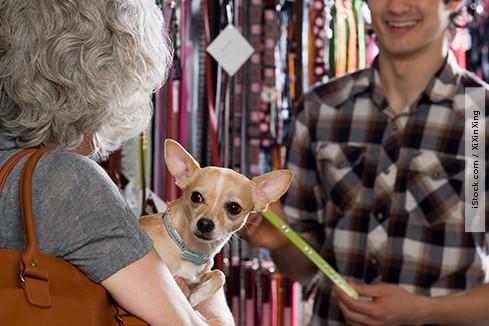 Lojas de animais não precisam contratar veterinários nem se registrar em conselho