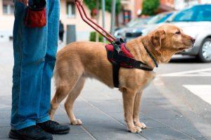 Comissão aprova isenção de IR para a compra de cão de assistência