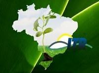 Receita Federal publica planilha com os Valores da Terra Nua (VTN) de 2.903 municípios
