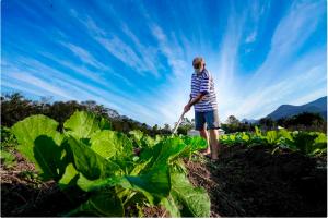 Fazenda catarinense disponibiliza novo manual para emissão de notas fiscais para produtores