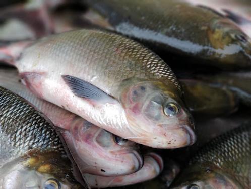 Maranhão reduz de 4% para 1% o ICMS sobre as operações com pescados