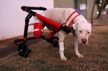 Homem que cortou as patas do cachorro Sansão não consegue reverter justa causa