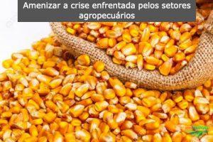 Governo gaúcho adia cobrança de ICMS do milho importado de países do Mercosul